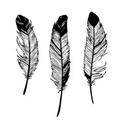 pióra czarno-biały rysunek graficzny