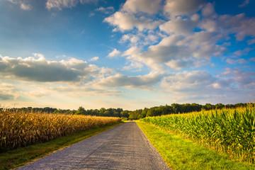 Corn fields along a road in rural York County, Pennsylvania.