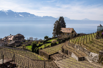 Vineyards of the Lavaux region over lake Geneva