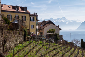Vineyards of the Lavaux region over lake Geneva