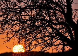 Intense sun on autumnal tree at dawn
