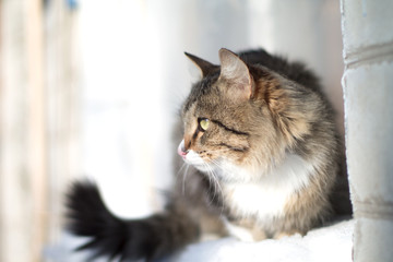 beautiful fluffy cat on a windowsill in winter