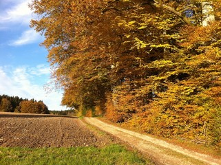 Forstweg im Herbst