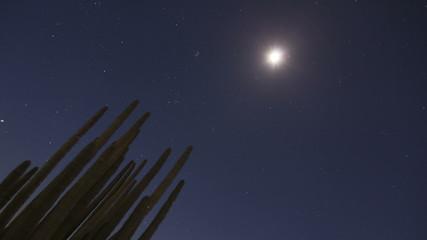 4K Timelapse Organ Pipe Cactuses