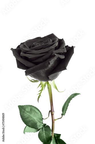 Papiers peints Roses Rose flower