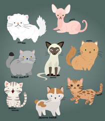 Cat vector set