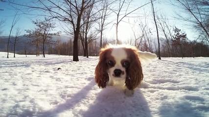 hi - speed dog
