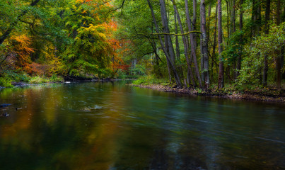 autumnal forest with wild river
