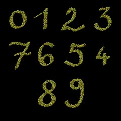 Numbers of raw green coffee beans template
