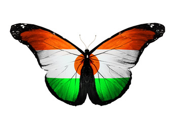 Indian flag butterfly, isolated on white background