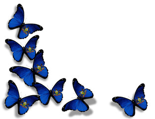 Pennsylvania flag butterflies, isolated on white background
