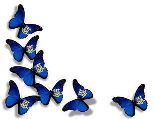 Connecticut flag butterflies, isolated on white background