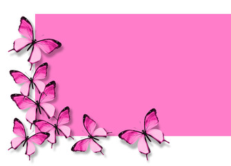 Many pink butterflies flying on white pink background