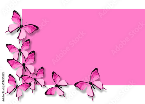 Deurstickers Vlinder Many pink butterflies flying on white pink background