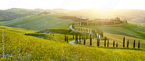 Foto op Canvas Heuvel Sunny fields in Tuscany, Italy