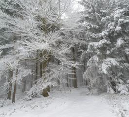 Neujahrs Winterwaldwanderung