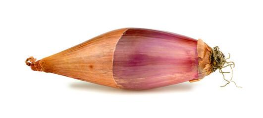Studio shot of long purple onion