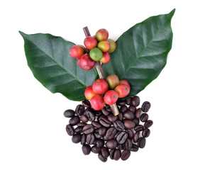 coffee beans and ripe coffee isolated on white background.