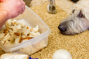 stuffing preparation - tearing pieces of bread with dog watching