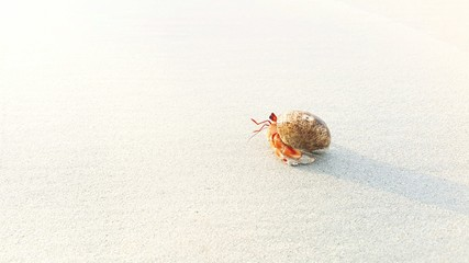 Red Hermit crab on the beach