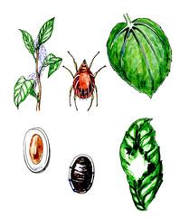 A plant pest. Botany