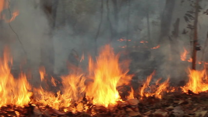 wildfire in mountain of thailand(pan shot)