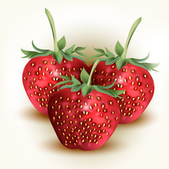 Vector fresh, red strawberry isolated on white