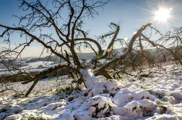 Winterlandschaft mit Apfelbaum