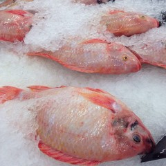 Tubtim fish on ice in market