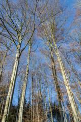 Winterlandschaft mit Bäumen im Wald