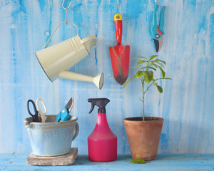 A young plant with gardening tools, springtime gardening concept