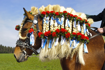 Pferd mit Schmuck der Mähne in Bayern