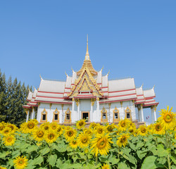 Thai temple with sunflower field