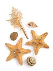 seashell  on white background