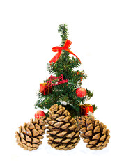 Fir cones and spruce