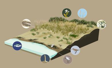 Ecosystem coast, beach