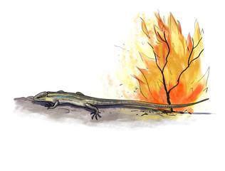 lizard fire danger