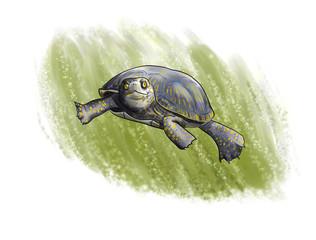 terrapin diving