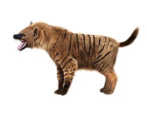 Prehistoric hyena illustration