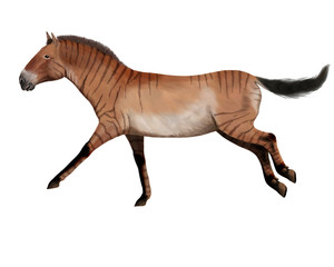 Hipparion, ancient horse