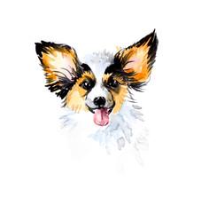 Papillon. Portrait small dog.