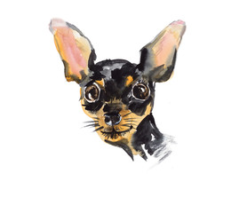 Russian Toy Terrier. Portrait small dog.