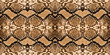 snake skin background - 75460087