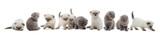set of kittens - 75462419