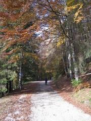 Passeggiando sotto gli alberi