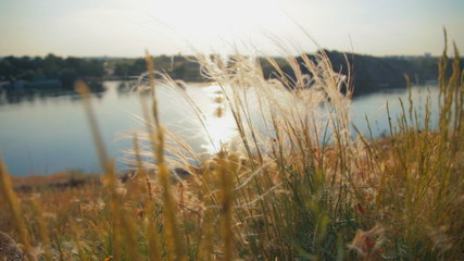 Beautiful landscape of the rives and feather grass