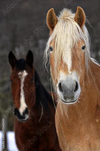 Foto op Plexiglas Paardrijden In coppia