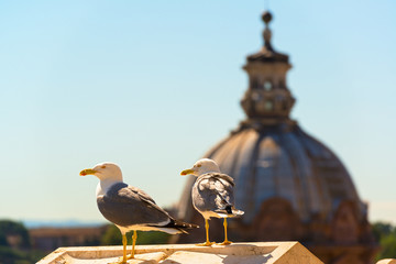 Gulls in the Roman Forum in Rome