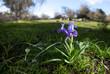 Obrazy na płótnie, fototapety, zdjęcia, fotoobrazy drukowane : Wild iris