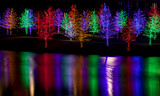 Fototapety Trees tightly wrapped in LED lights for the Christmas holidays r